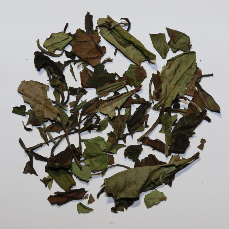 Camellia Te 0711 Hvid Te Pai Mu Tan økologisk