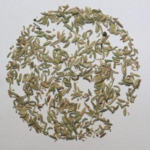 Camellia Te 1512H Urte Te Fennikel økologisk