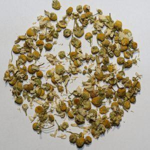 Camellia Te 1515 Urte Te Kamille