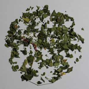 Camellia Te 1516F Urte Te Moringa Økologisk