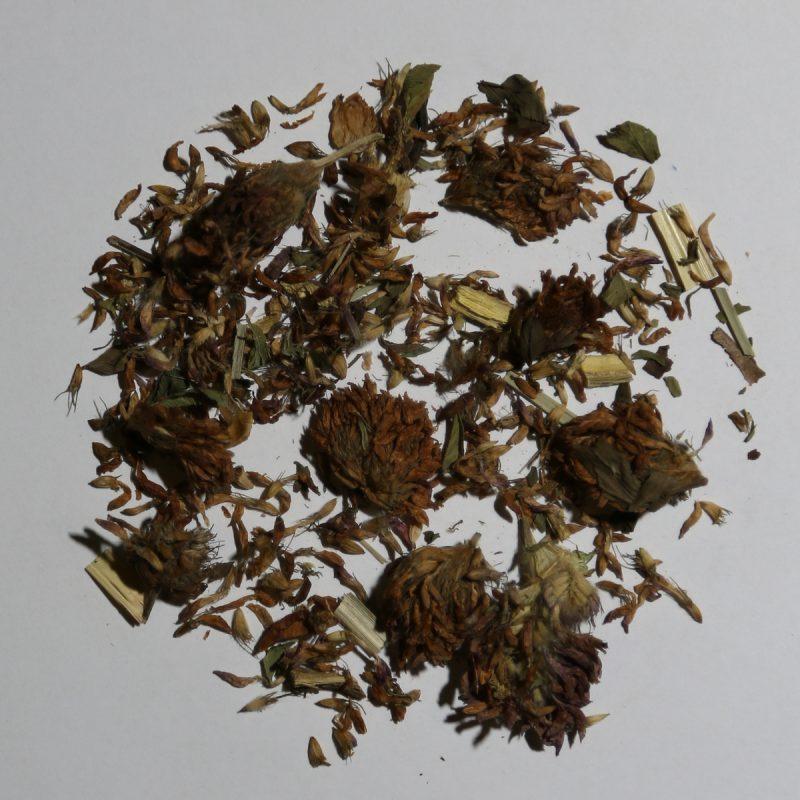 Camellia Te 1618H Urte Te Rødkløver Mix